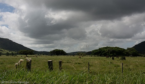 The quintessential pampas; Hlls, grassland, trees, cattle.
